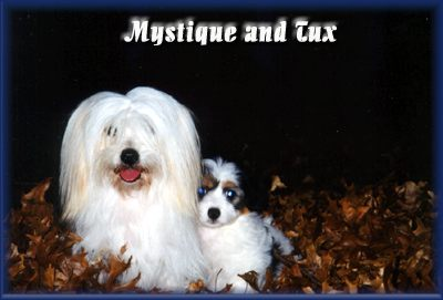 Mystique and Tux.jpg (18666 bytes)